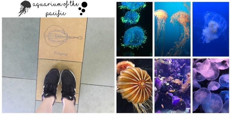 california-aquarium